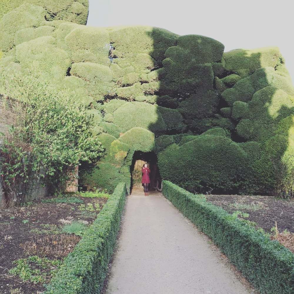 A giant yew tree Powis Castle | Study Work Travel Blog