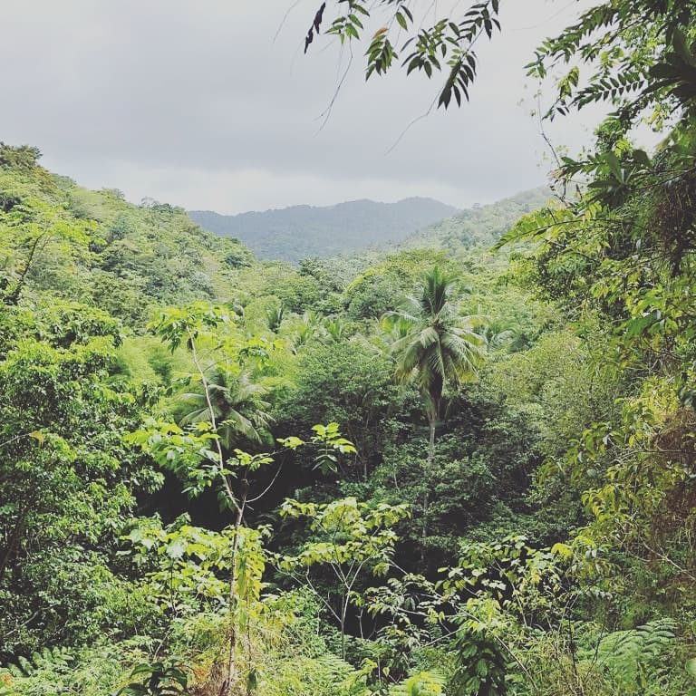 Zip-lining Saint Lucia with Study Work Travel Blog