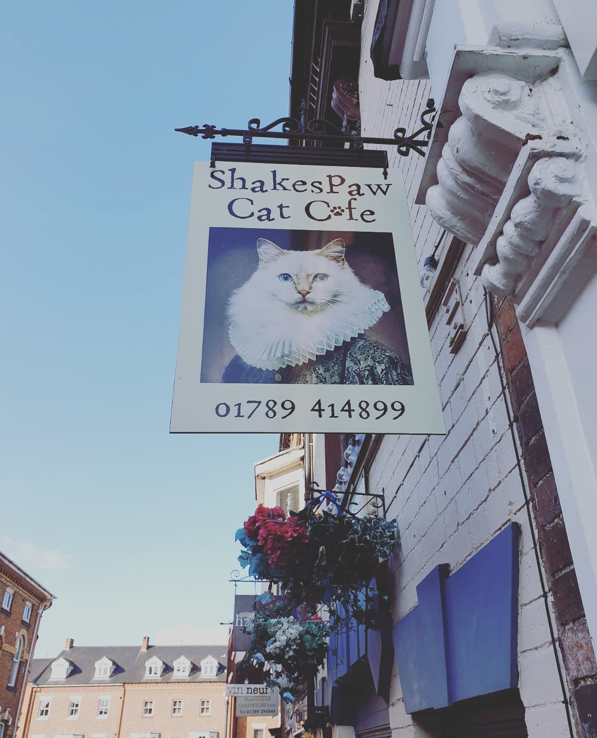 Shakespaw Cat Cafe stratford with Study Work Travel Blog