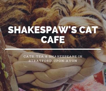 shakespaw cat stratford